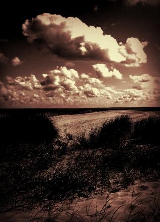 jardin-des-dunes